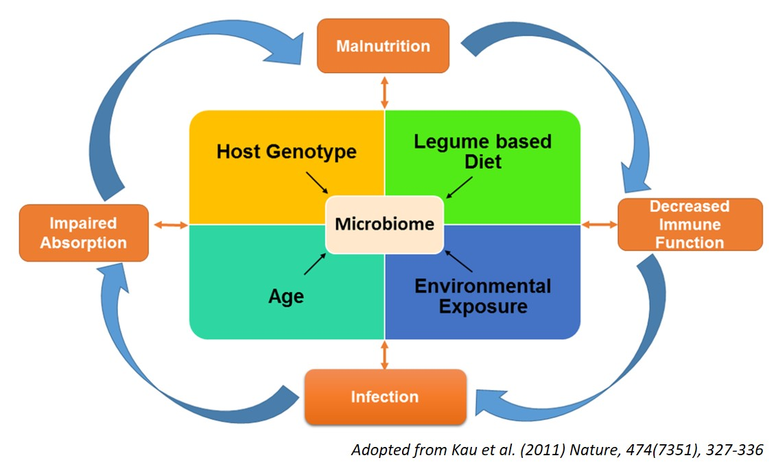 Gut-Microbiome_Updated.jpg