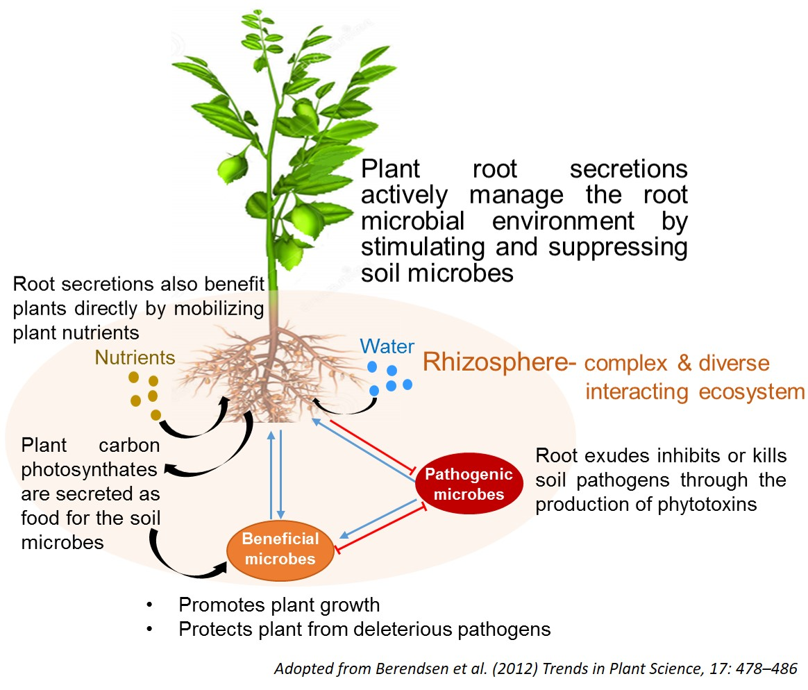 Soil-Microbiome-updated.jpg