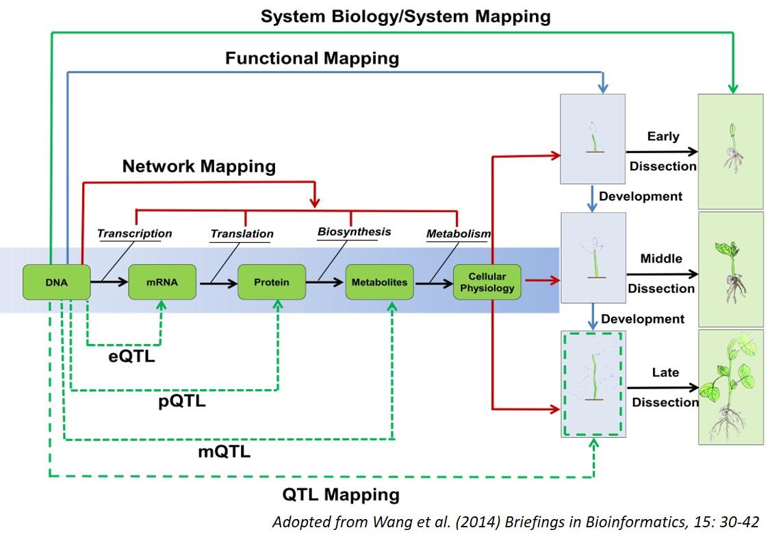 Trait-Biology-updated.jpg